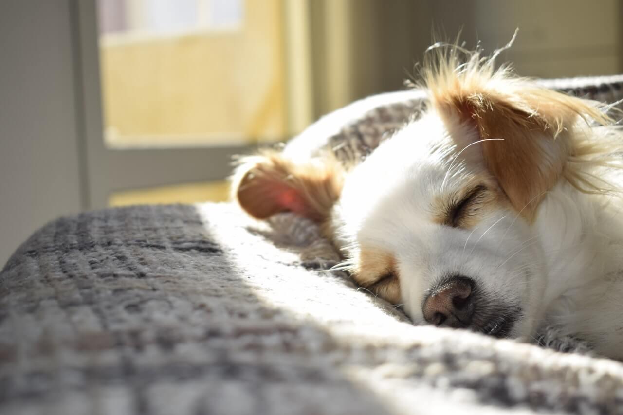 Pourquoi investir dans un coussin à mémoire de forme pour son chien?