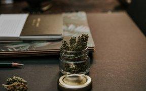 Les bienfaits des graines de cannabis CBD et graines de chanvre