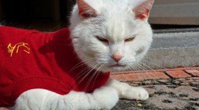 Les vetements pour chat necessaires ou superflus